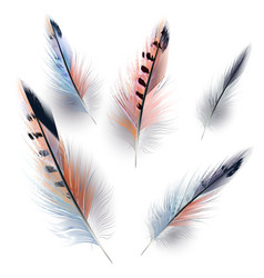 collection realistic feathers for design vector image