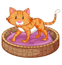Ginger cat in basket vector