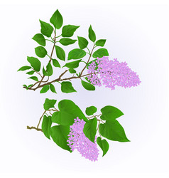 lilac twigs with flowers and leaves vintage set vector image