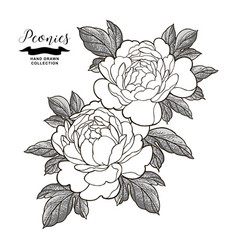 peony flowers and leaves in japanese tattoo style vector image