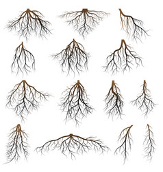 set of tree roots vector image
