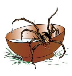 Wet spider coming out of a bowl vector