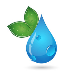 drop of water and green leaves vector image vector image