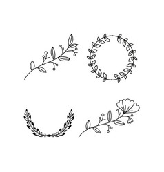branch floral laurel vector image