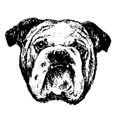 Bulldog head bw vector