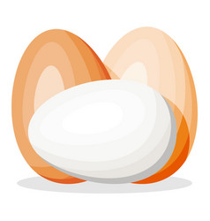 chicken eggs isolated on white background vector image