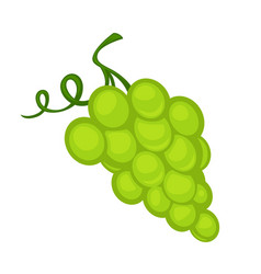 A bunch green grape vector
