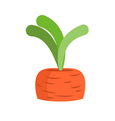 Carrots growing isolated fresh vegetables on vector