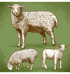 Engraving sheeps retro vector