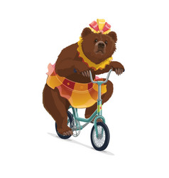 isolated circus bear in skirt riding on bicycle vector image