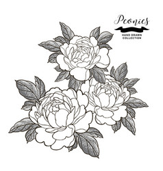 Peony flowers composition in japanese tattoo vector