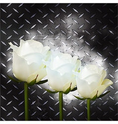 White roses on black metal plate vector image