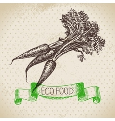 Hand drawn sketch carrots vegetable Eco food vector image vector image