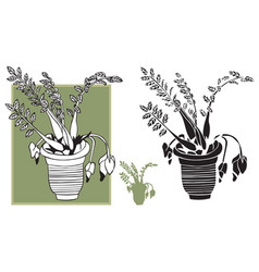 room flower in pot vector image vector image