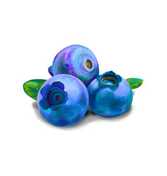 blueberry sweet fruit forest berry vector image