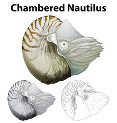 Doodle character for chambered nautilus vector