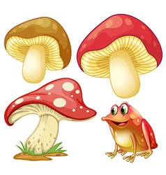 Fresh mushrooms and red frog vector