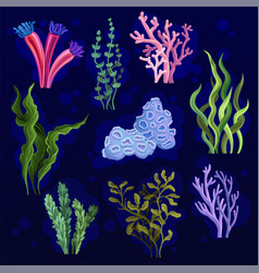 seaweed and aquatic marine algae set underwater vector image