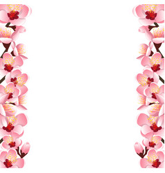 prunus persica - peach flower blossom border vector image