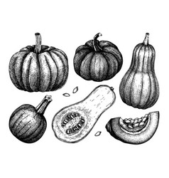 pumpkin hand sketched set thanksgiving design ele vector image