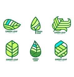 Set of green leaf logo templates vector image