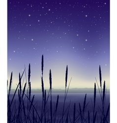 Starry night landscape with reeds vector