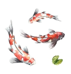 Three Koi fish on white background vector