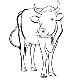 cow animal vector image