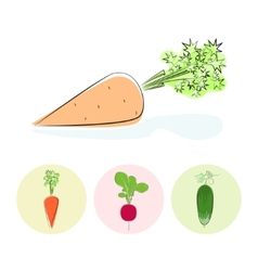 Icons carrot cucumber radish vector