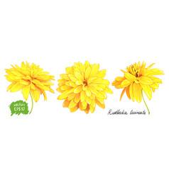 Rudbeckia laciniata yellow flower vector