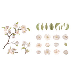 Cherry flower set isolate on white background vector