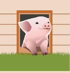piglet come out from the pet door vector image