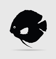 discus fish vector image vector image