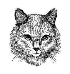 Hand drawn portrait of cute cat sketch art vector