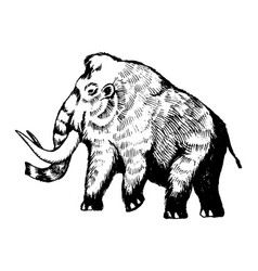 Mammoth engraving vector