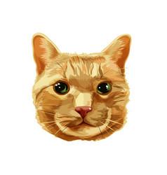 Red cat head vector