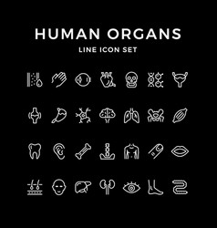 set line icons human organs vector image