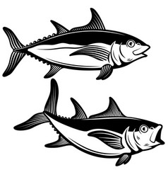 Tuna fish in engraving style design element for vector
