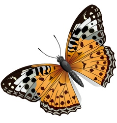 some orange butterfly vector image vector image