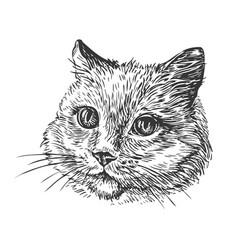 hand-drawn portrait of cat sketch vector image