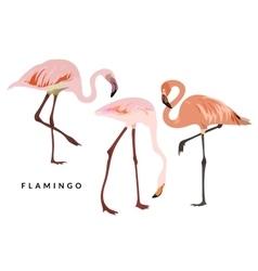 Pink flamingo set vector image
