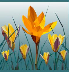 yellow crocus blooming flowers isolated on white vector image vector image