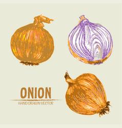 Digital detailed onion hand drawn vector