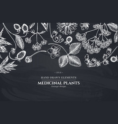 Floral design with chalk aloe calendula lily of vector