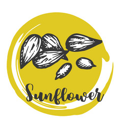 sunflower seed vintage hand drawing of seeds vector image