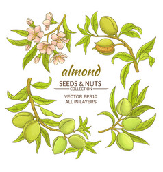 Almond set vector