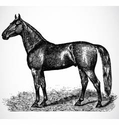 Antique horse vector