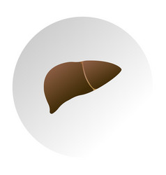 liver unhealthy human internal organ image vector image