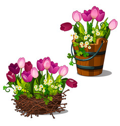 Pink tulips in wooden bucket and nest vector
