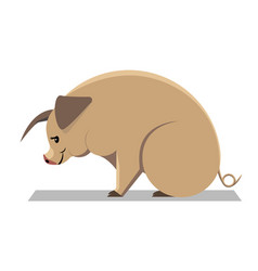 yellow earth pig vector image